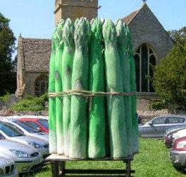 Huge polystyrene asparagus model