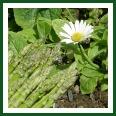 asparagus with a flower