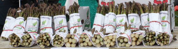 Bundles of fresh asparagus